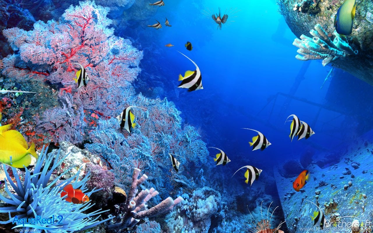 3d Aquarium Wallpapers Free Download. Download Fish Tank