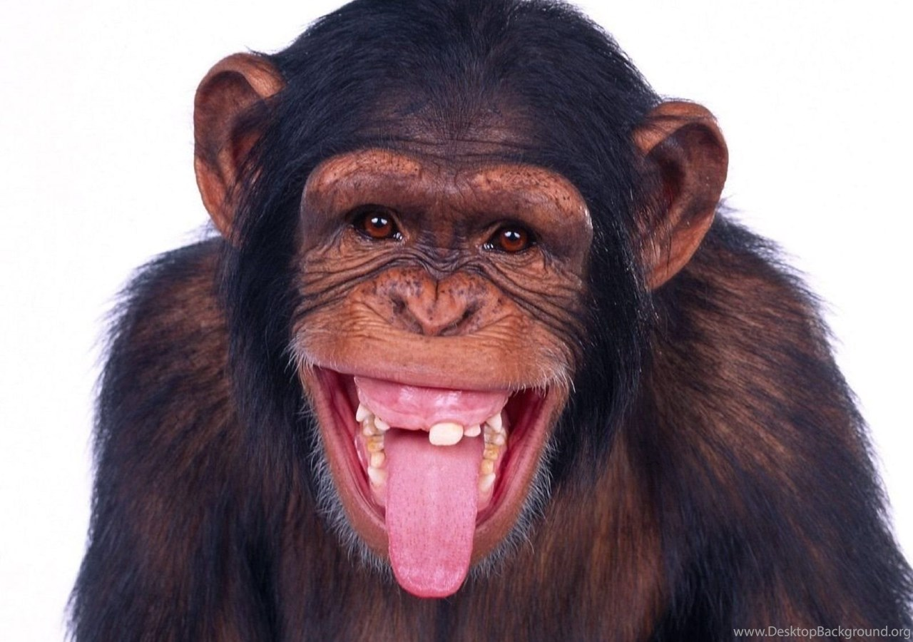 Scary Monkey Wallpapers Free Pictures