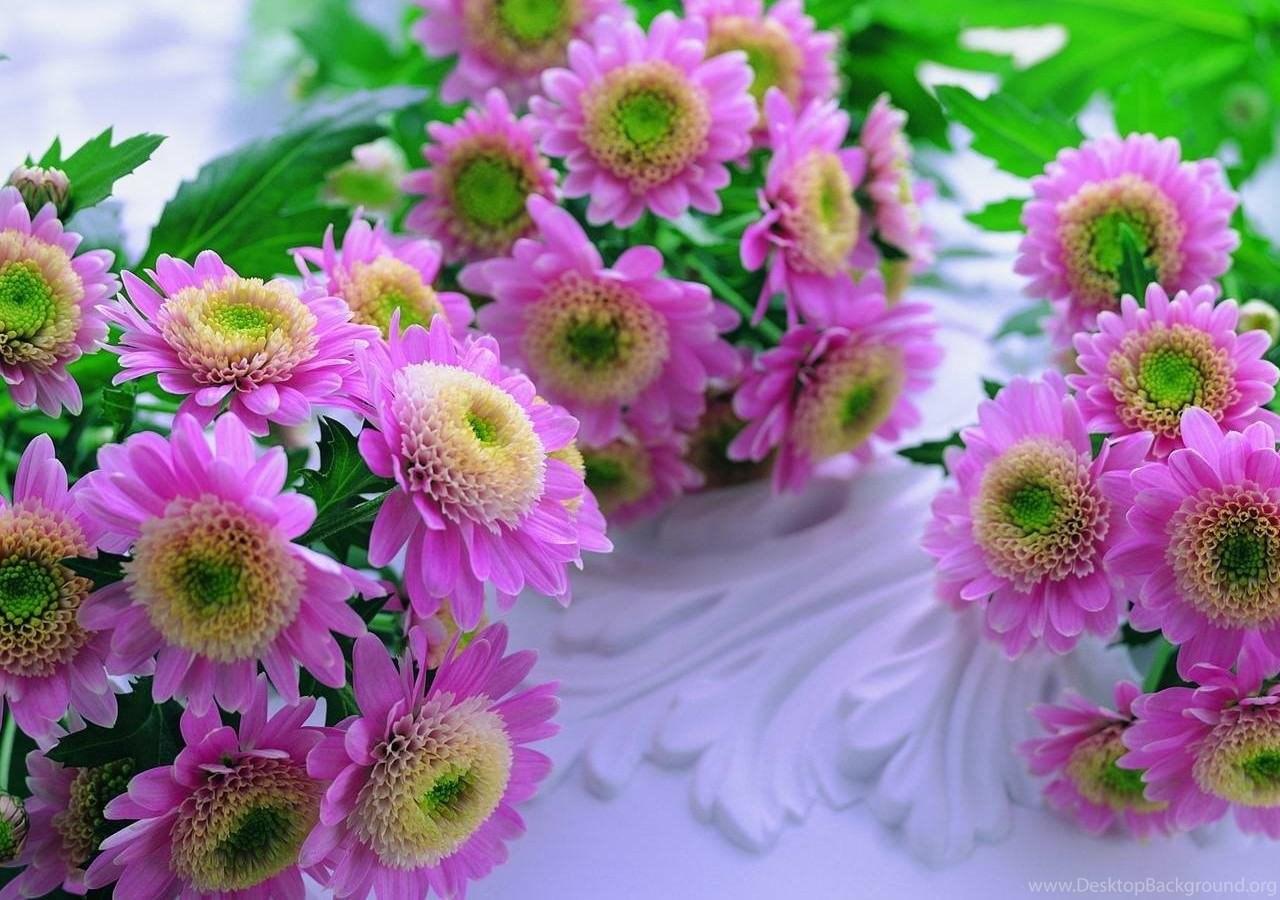 Download beautiful flowers wallpapers hd wallpapers desktop popular izmirmasajfo