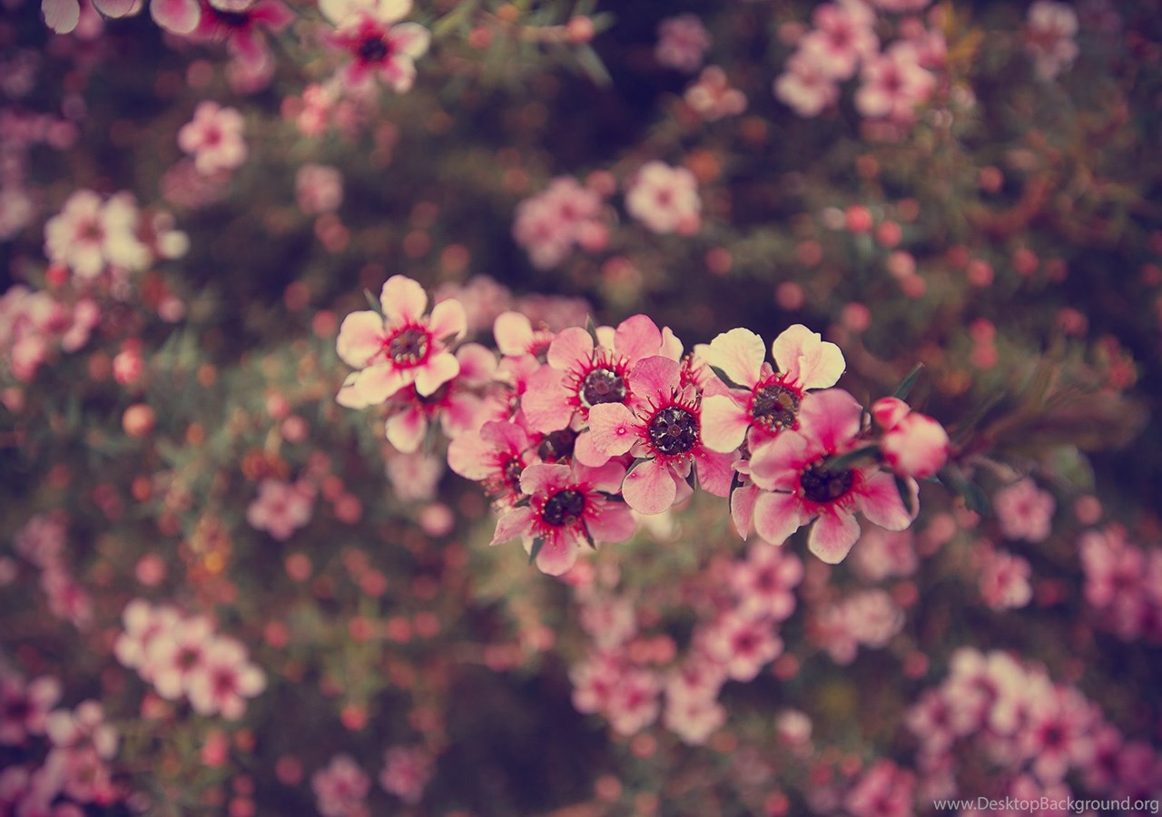 Tumblr Photography Vintage Flowers Wallpapers Desktop Background