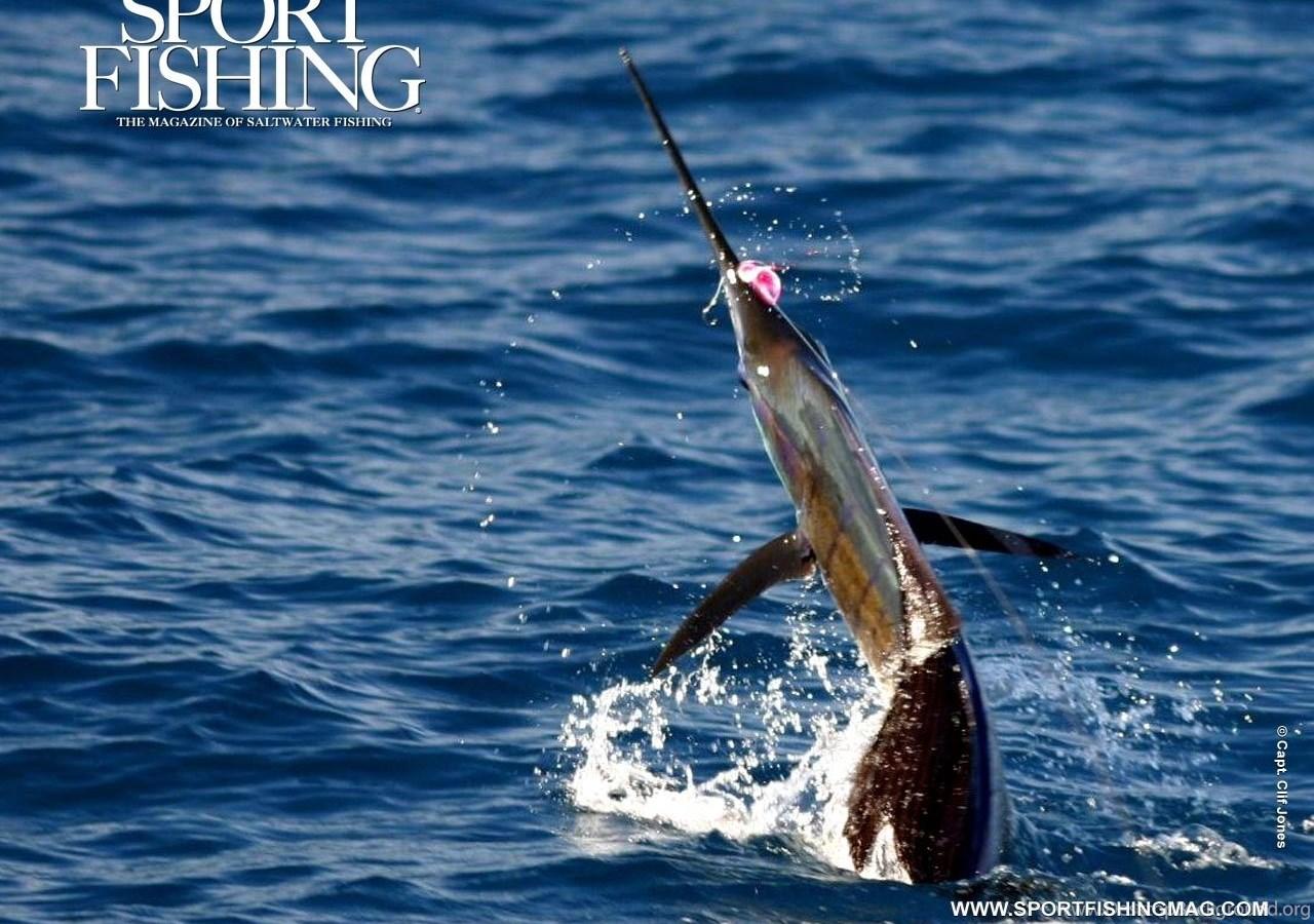 Wallpapers Fishing Browse All Sport Sailfish 1280x1024 Desktop