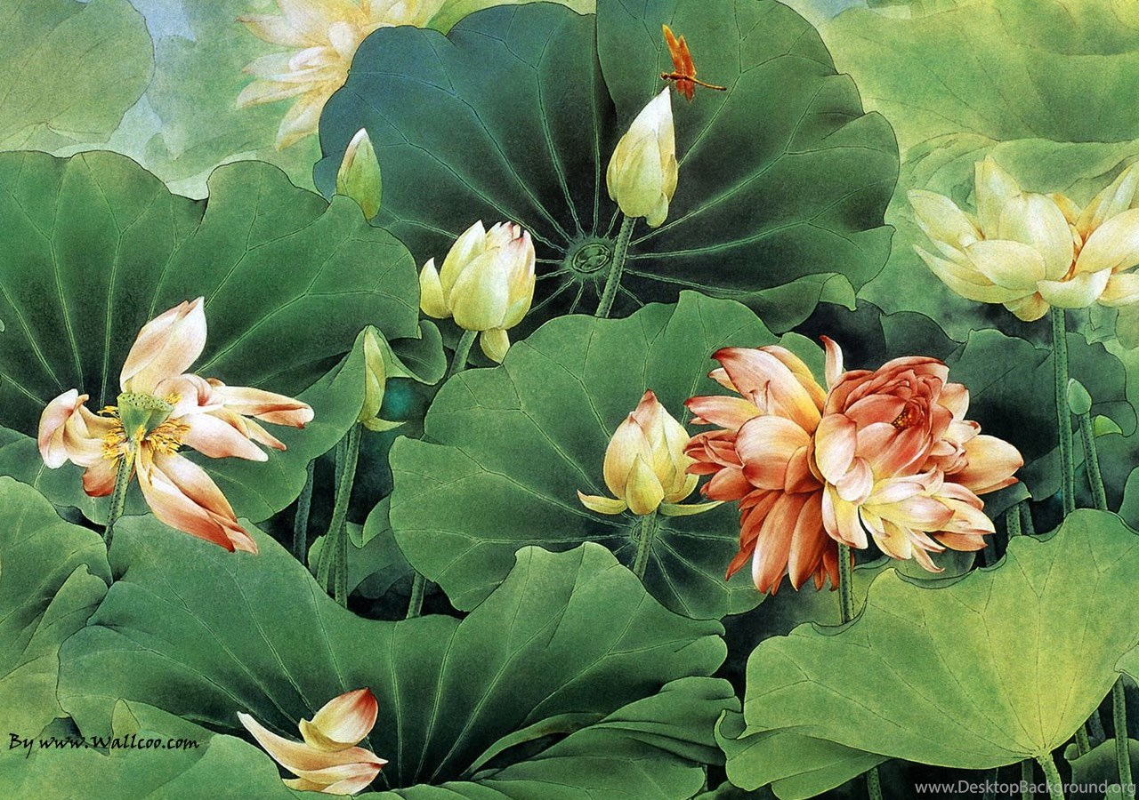 Chinese Painting Lotus Flower Wallpapers Desktop Background