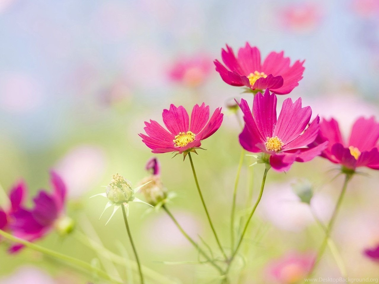 Pretty Flowers Backgrounds Desktop Background