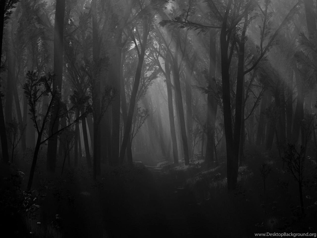 Красивый Темный лес HD обои скачать | 960x1280