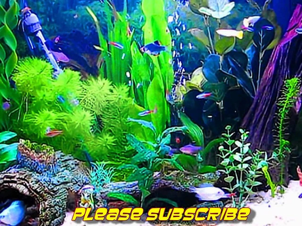 Обои для рабочего стола скачать бесплатно анимированные живой аквариум