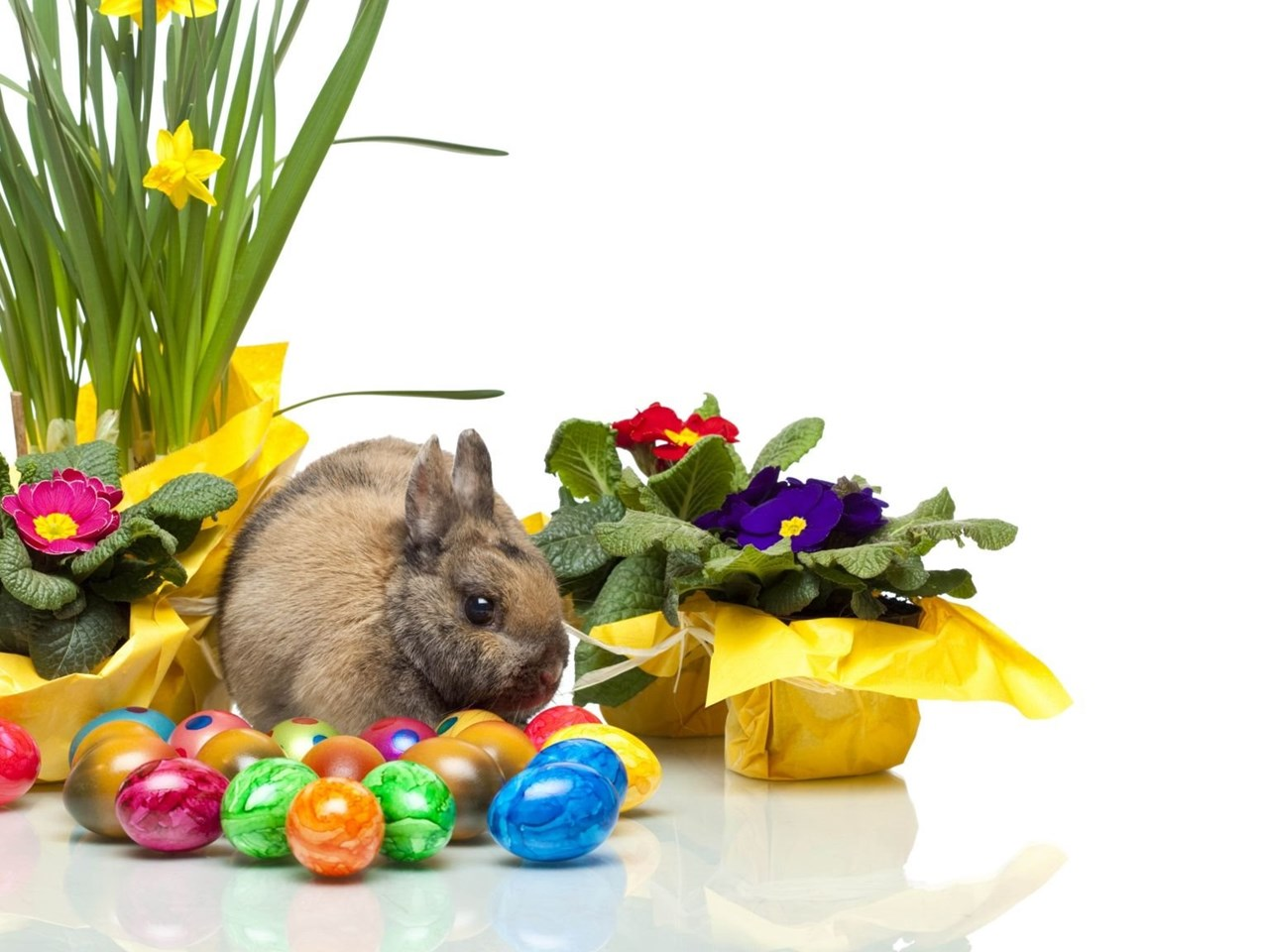 Download Wallpapers 2048x1152 Easter Bunny Eggs Violets