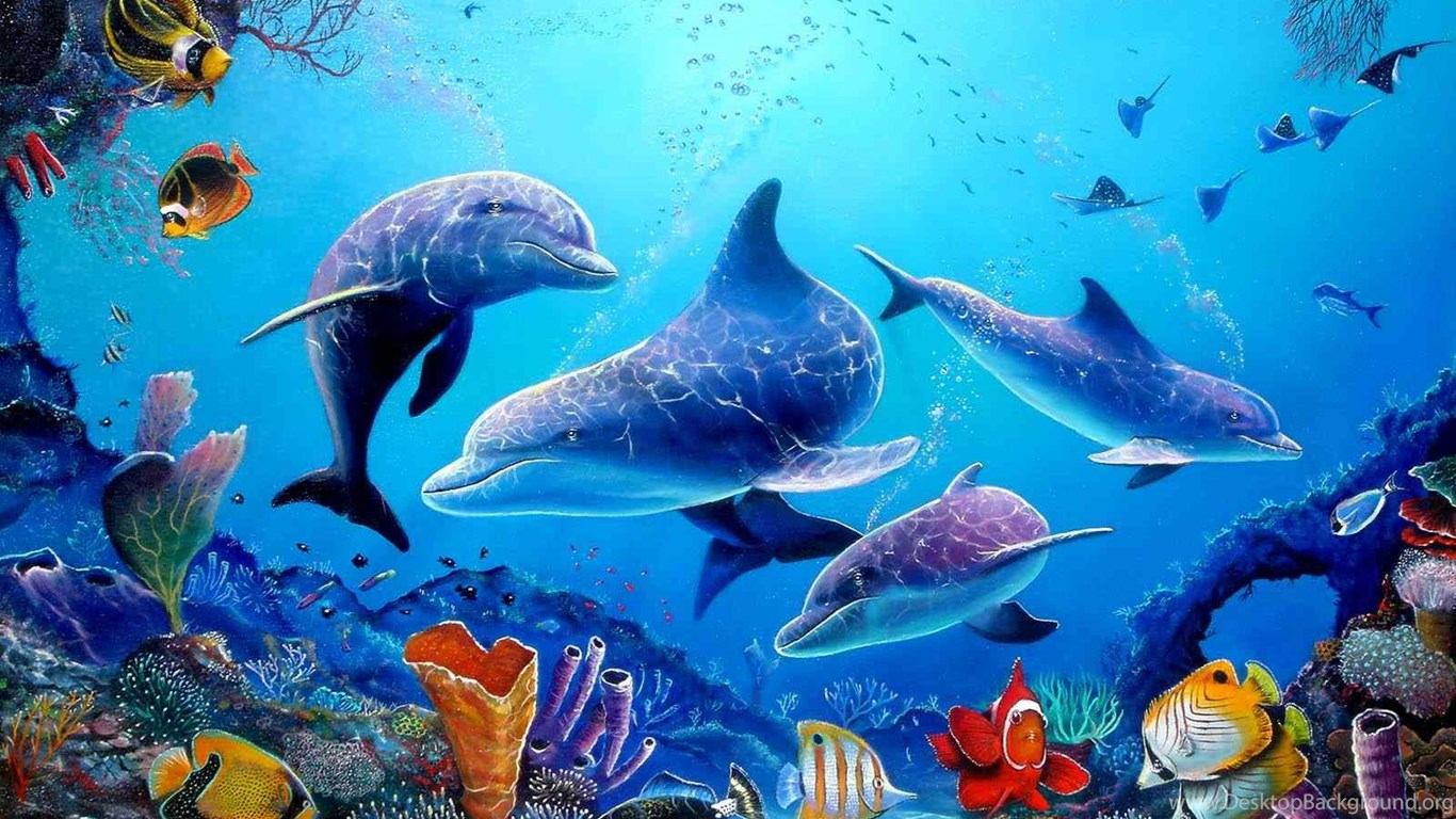 wonderful dolphin wallpapers desktop background