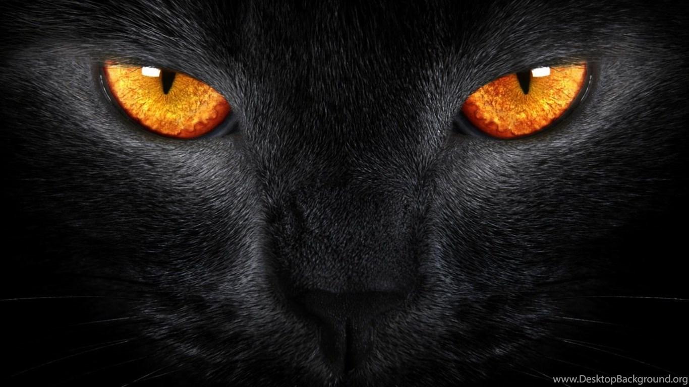 cool black cat wallpapers desktop background