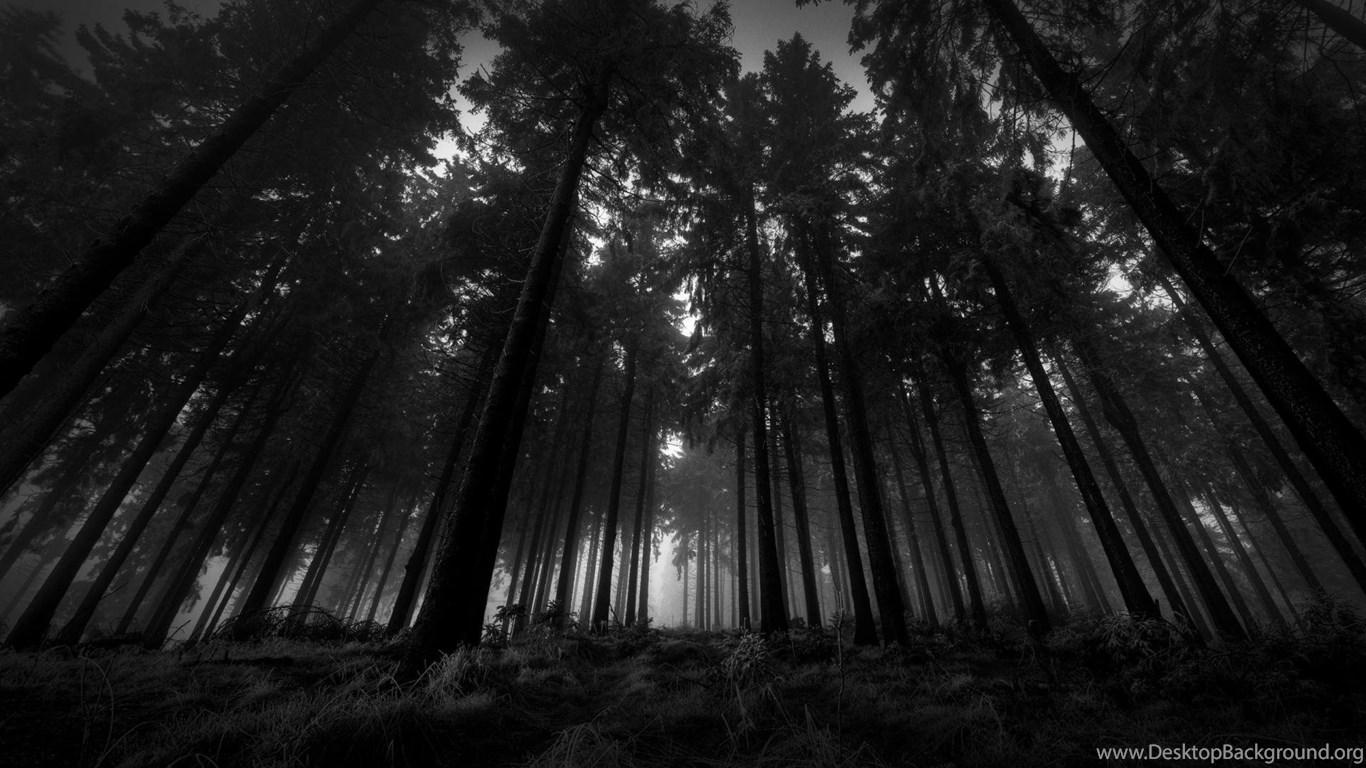In The Dark Forest Wallpapers Desktop Background
