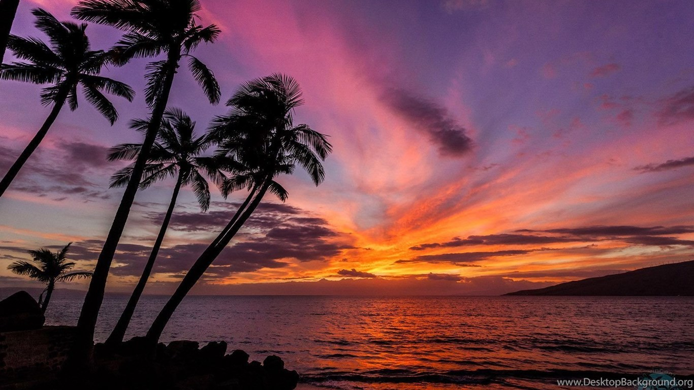 Sunset Over Beach Of Palm Trees Hd Wallpaper: Palm Trees Sunset Wallpapers HD Free Download Desktop