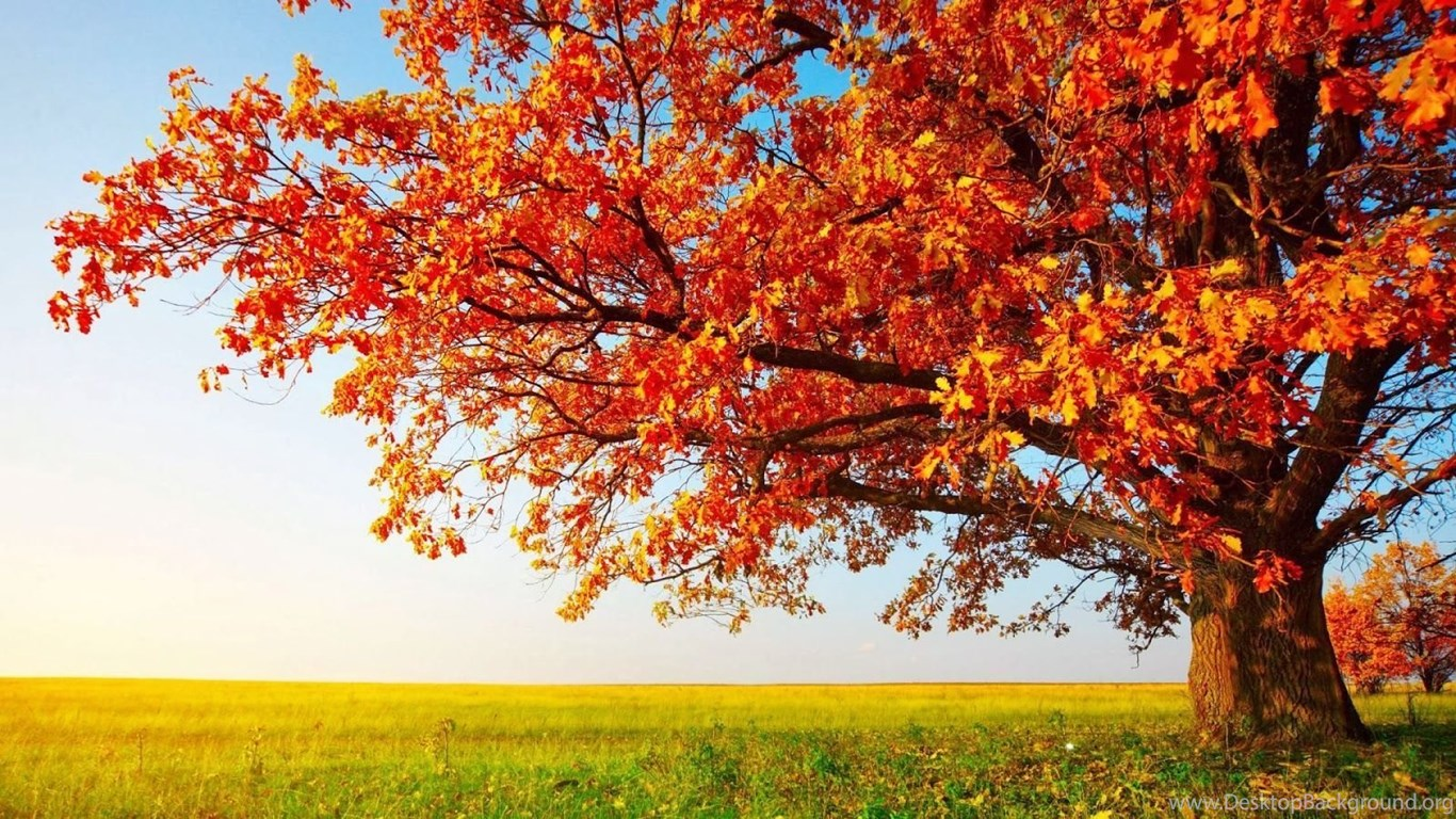 Top Fall Scenery Wallpapers Large Images For Pinterest Desktop