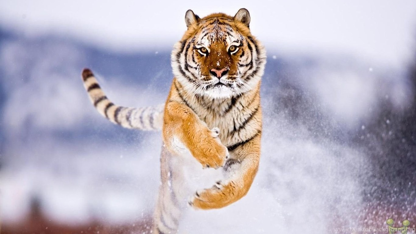 wildlife wallpapers hd for desktop 37 cool wallpapers hdnaturewall