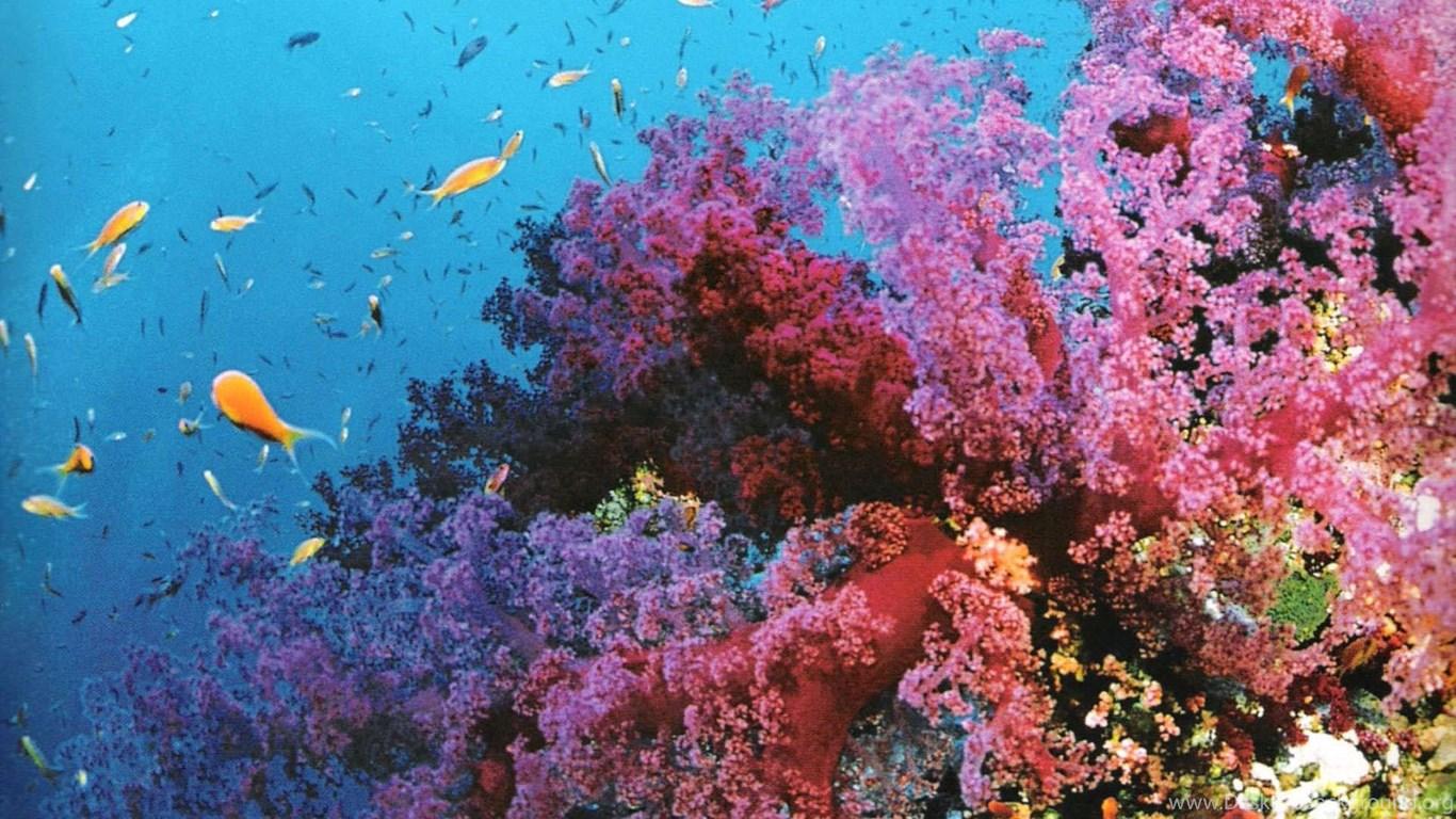 Great barrier reef 2 desktop background - Great barrier reef desktop background ...