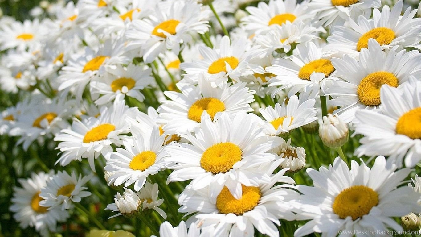 Flower Wallpapers Tumblr Hd Black And White Widescreen Download For