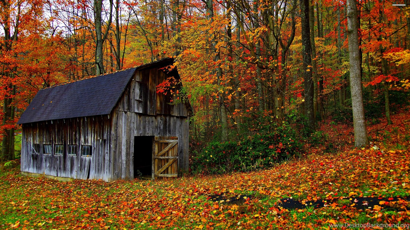 Old Barn In The Colorful Forest Wallpapers Desktop Background