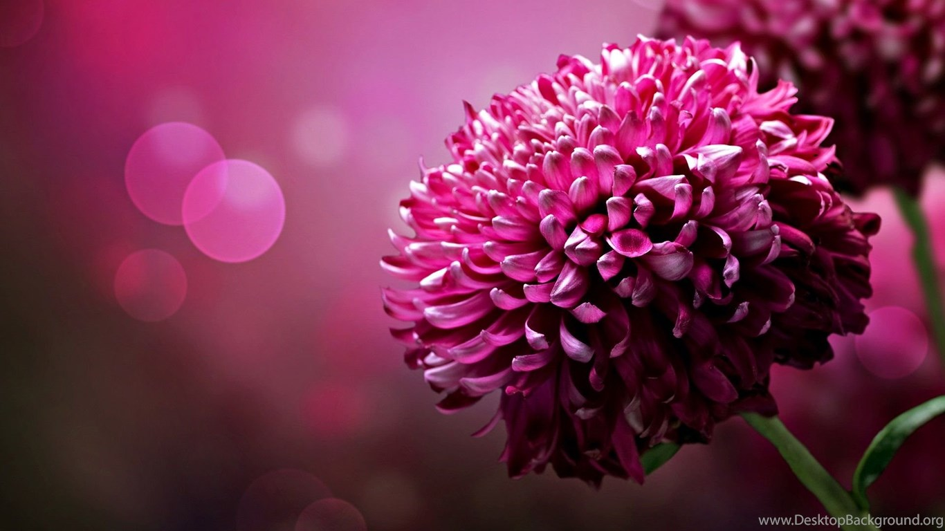 Hd Wallpapers Beautiful Flowers Backgrounds For Your