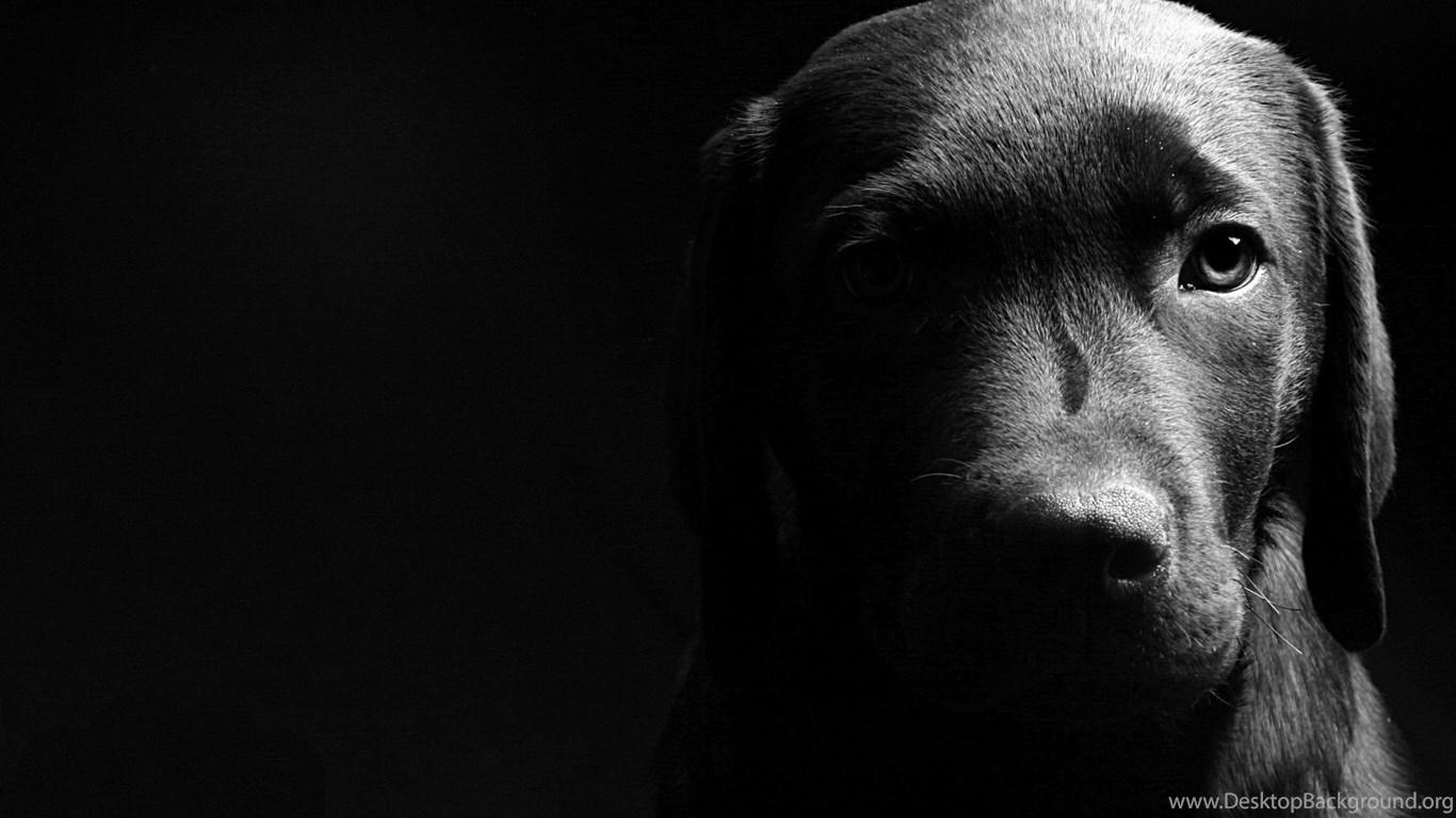 Black Dog Desktop Wallpaper, Black Dog ...