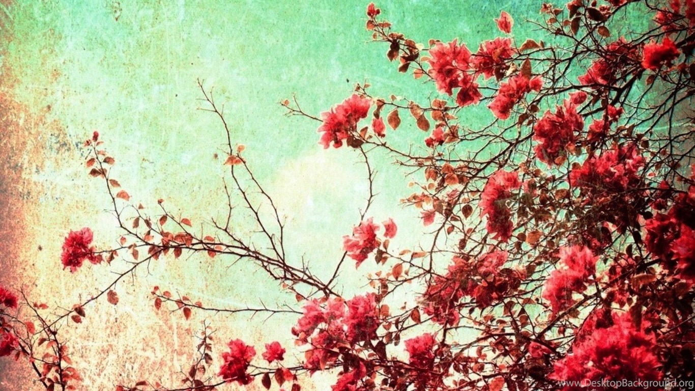 Hipster Flower Wallpapers Tumblr Feel Hearts Desktop Background