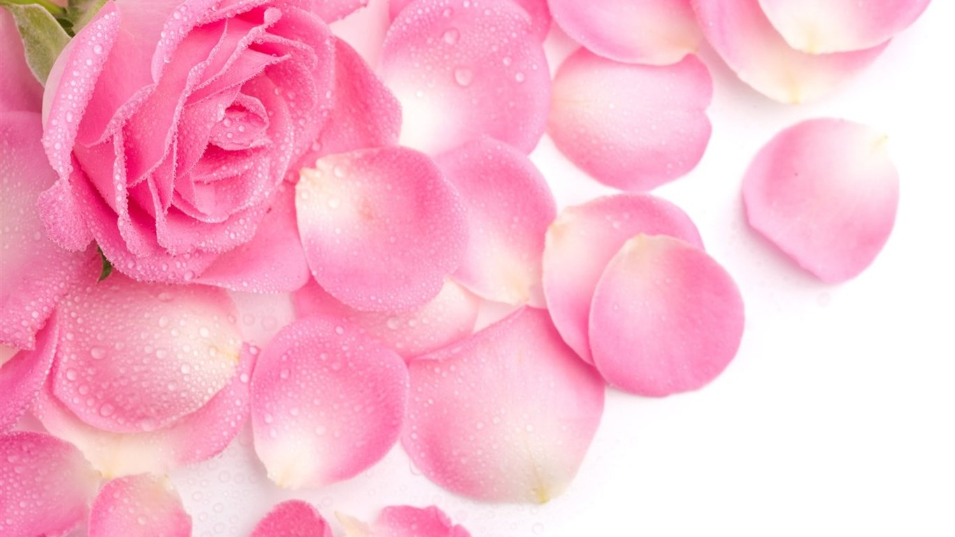 Simani Pink Flowers Wallpapers Cute Girly Pink Color Backgrounds