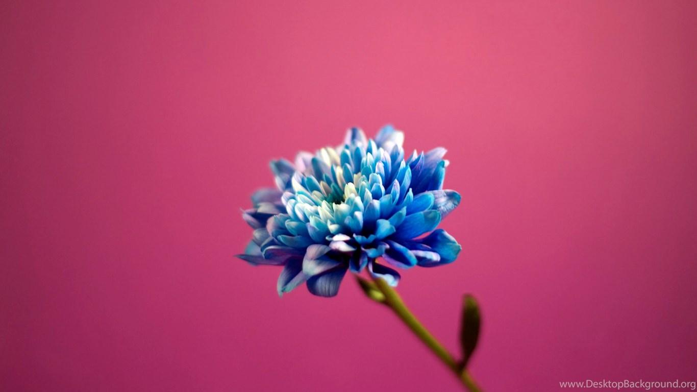 Full Hd Pictures Pretty Blue Flower 966 55 Kb Desktop Background