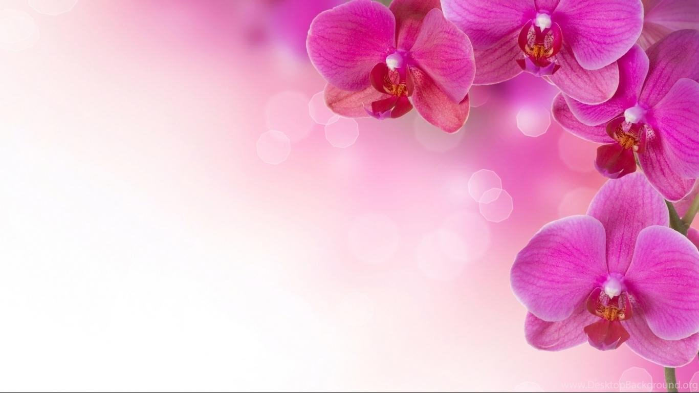 Baby Pink Flowers Wallpapers Wallpapers Desktop Background