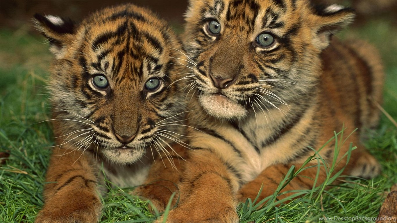 Cute Baby Animals Wallpapers HD Wallpapers And Pictures ...
