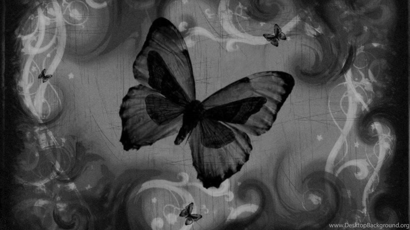 1391 Black Butterfly Images Wallpapers Walops Com Desktop Background