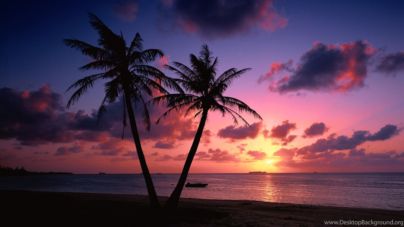 Tropical Beach Palm Trees Sunset Wallpapers Desktop Background