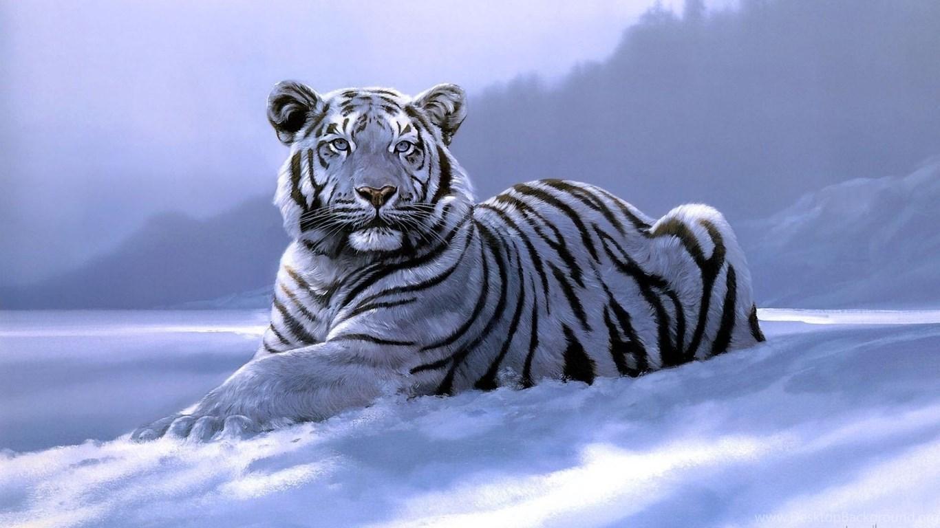 White Tiger Wallpapers 3d Desktop Background