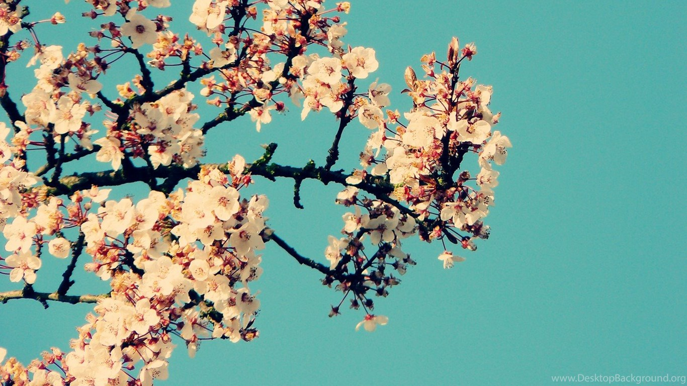 Floral Wallpapers Tumblr Wallpapers Zone Desktop Background