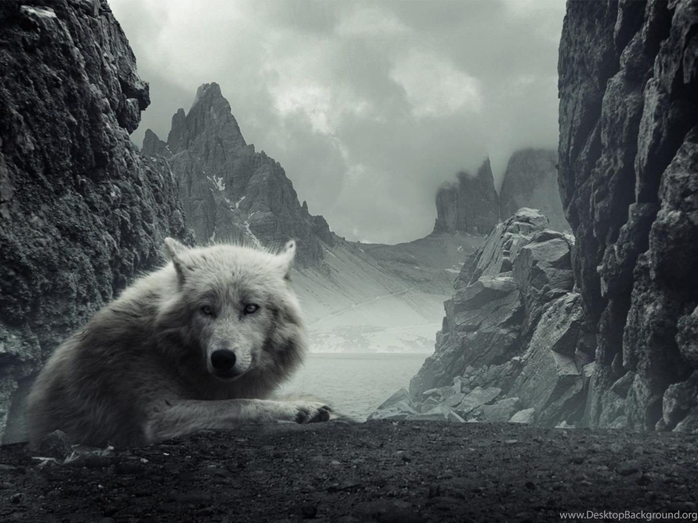 Desktop Hd Black And White Wolf Wallpapers Desktop Background