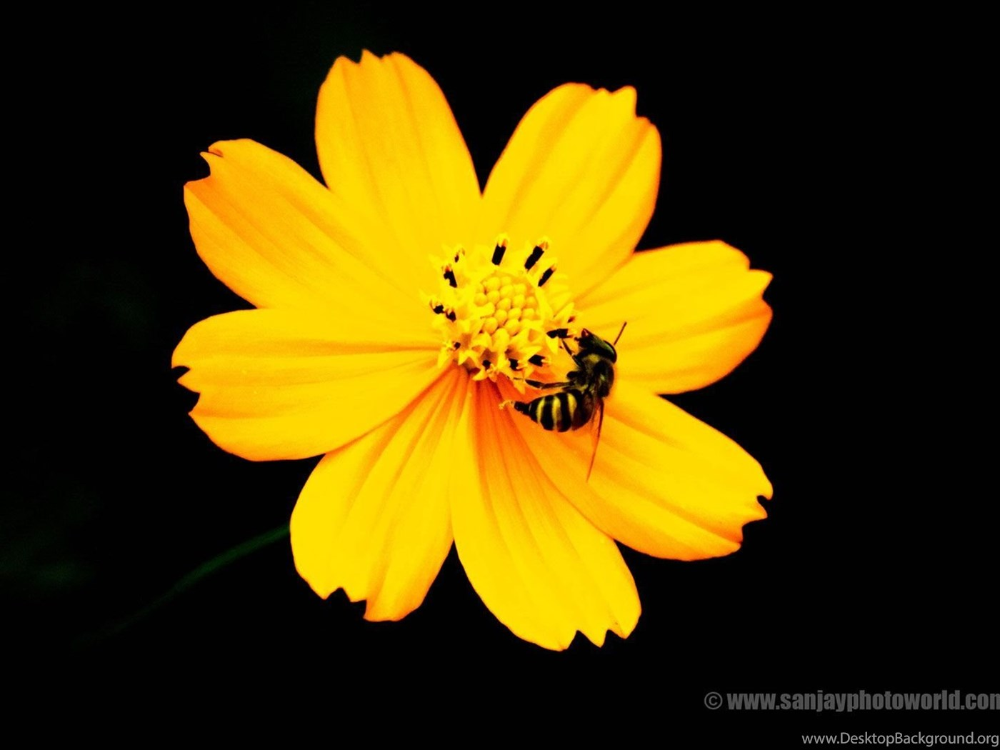 Sanjay Photo World Hd Beautiful Flowers Wallpapers Vol 04 Desktop