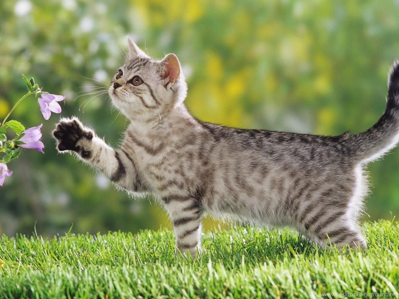 Beautiful Cute And Funny Cats Desktop Wallpapers Desktop Background