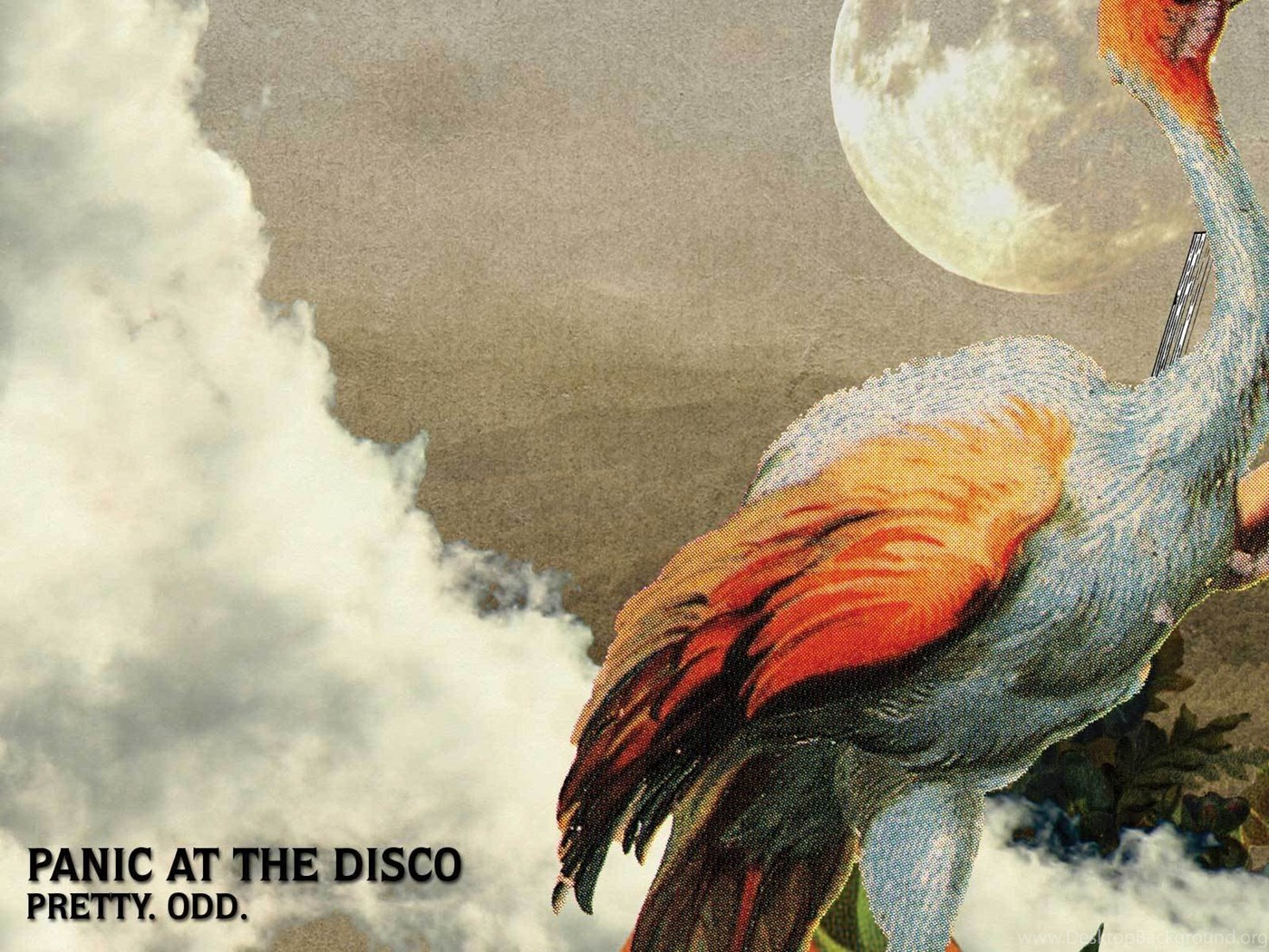238543 panic at the disco panic at the disco wallpapers 2842216