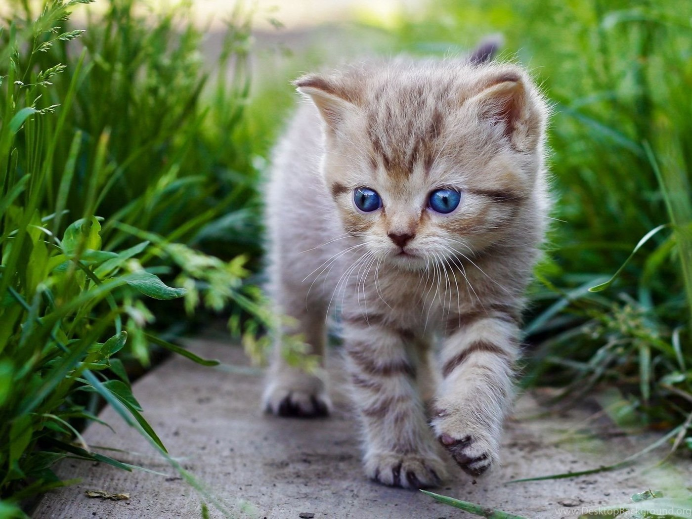 High Resolution Cute Baby Animal Kitty Cat Wallpapers Hd 11 Full Desktop Background