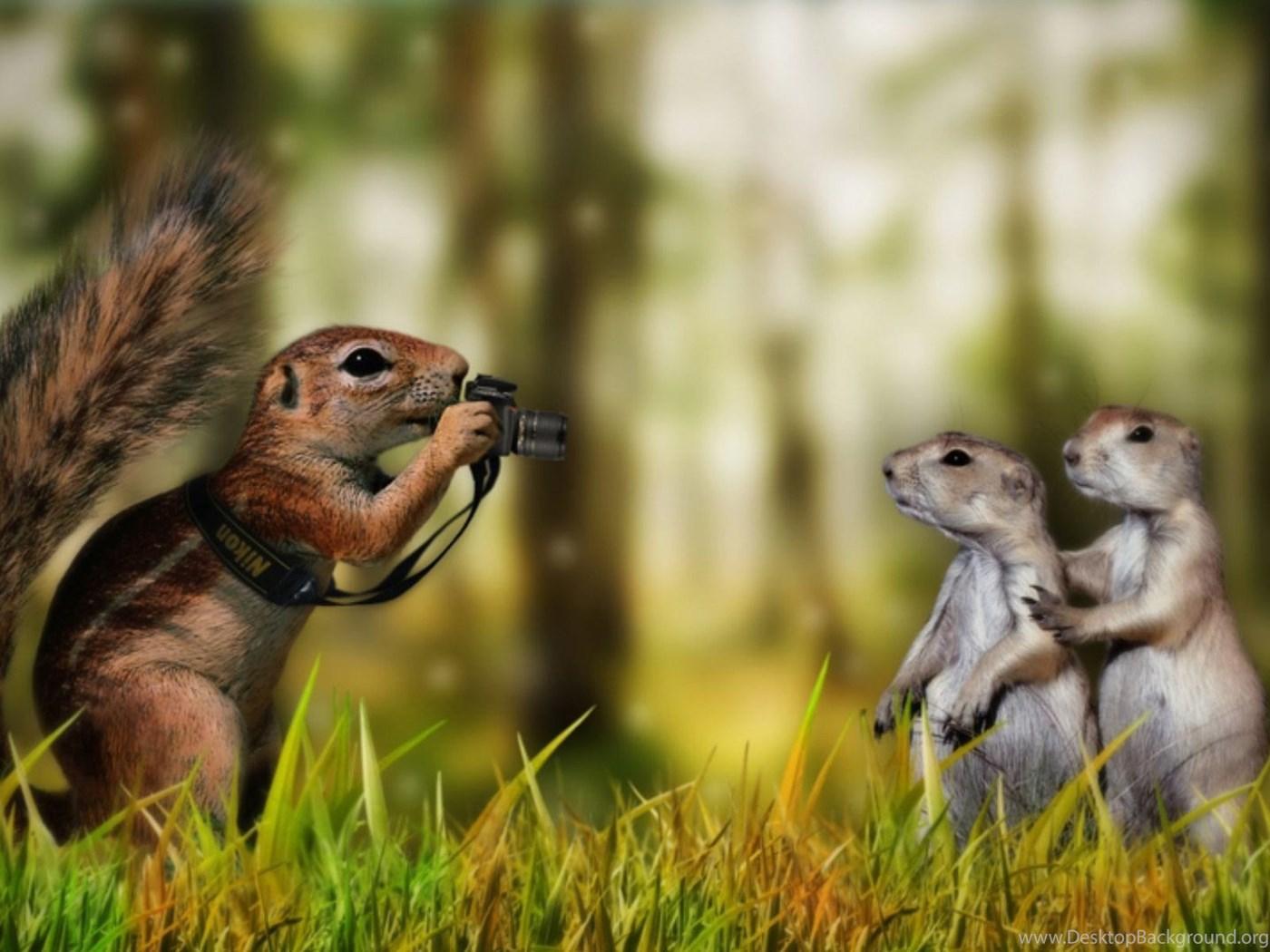 Very funny squirrel wallpapers hd desktop wallpapers - Funny squirrel backgrounds ...