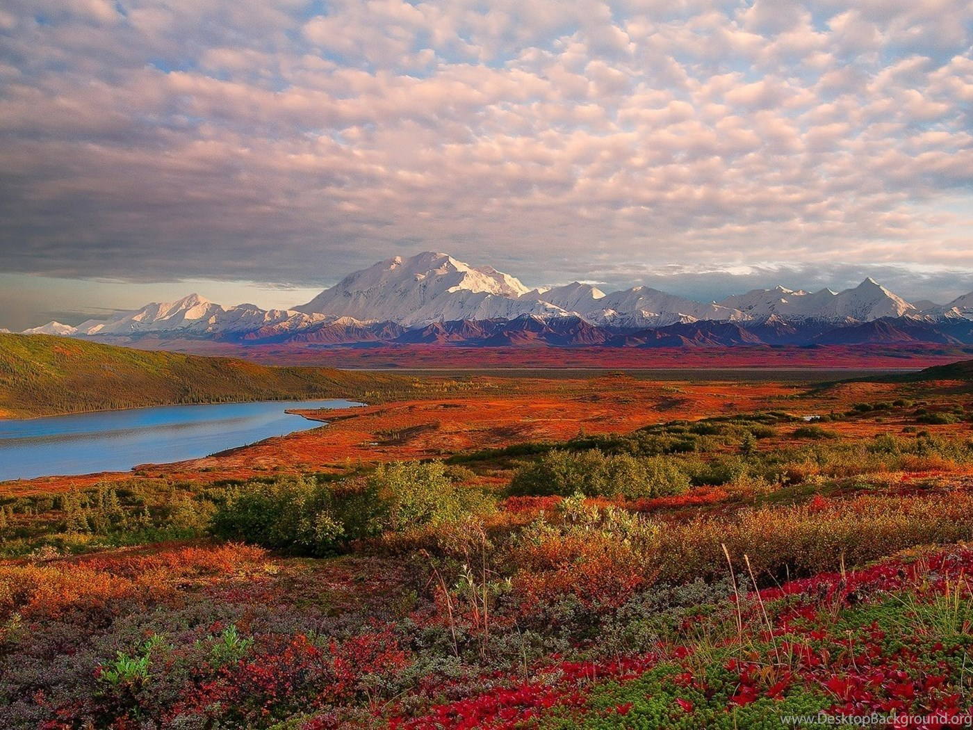 denali national park catholic single men After denali, johnson went south to tok, buying two $400 denali park buses before he left, and purchasing some property upon his arrival he shuttled the buses down and began his alaskan life the move to this highway town made sense.