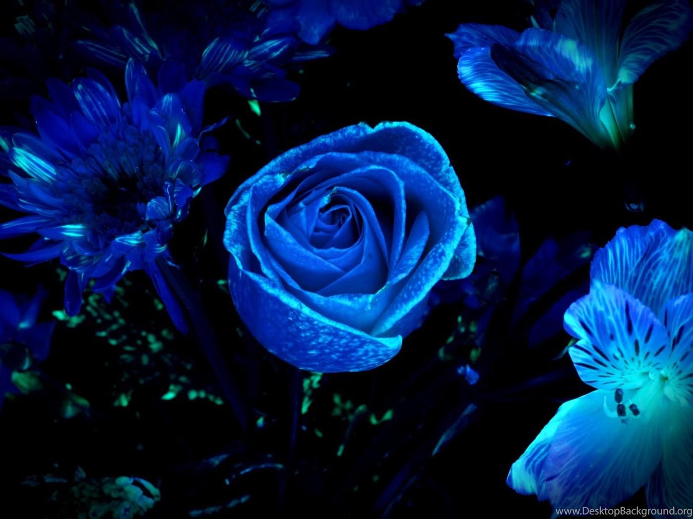 Blue Floral Wallpapers Hd Backgrounds Desktop Background
