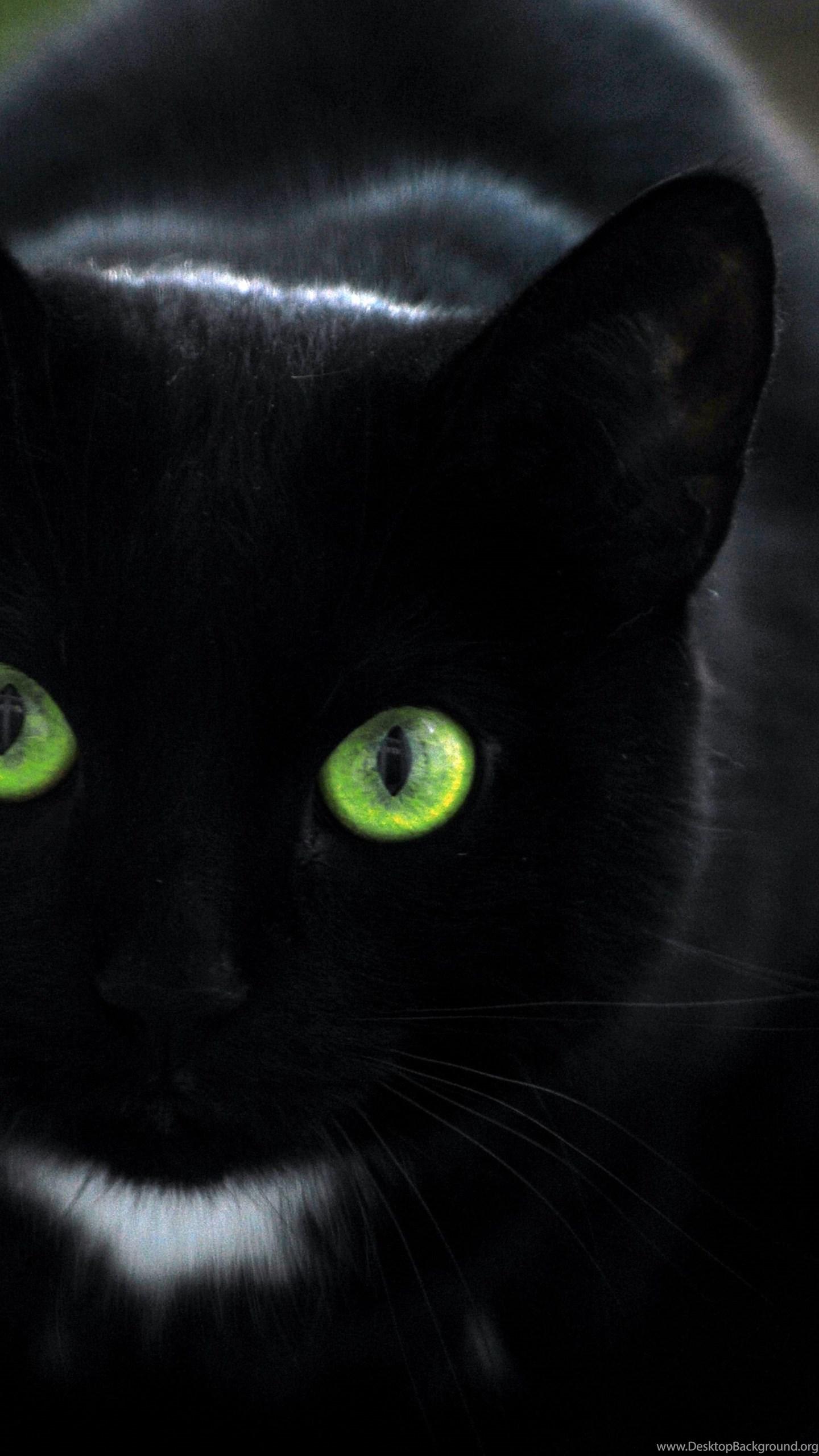 Black Cat Kitten Wallpaper Hd Cute Cat Wallpapers Desktop Background