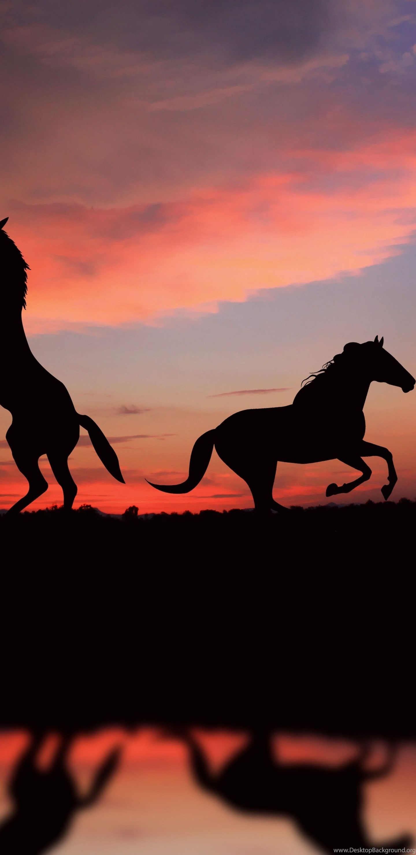 358863 horse wallpaper animals pets horse night sunset cute