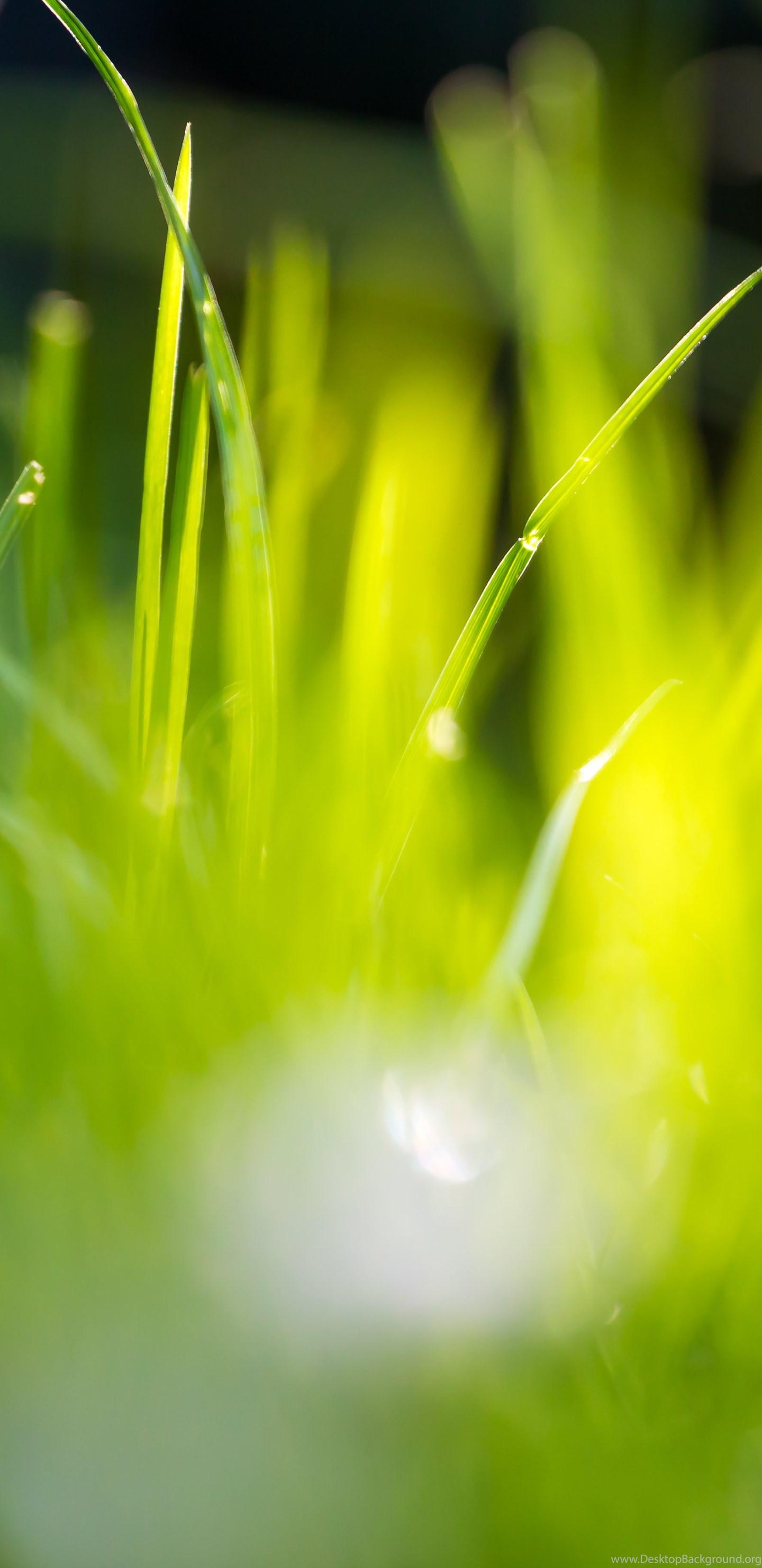 12 Beautiful Green Grass Field Hd Wallpapers Desktop Background