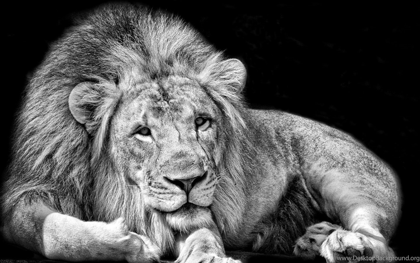 page 4: full hd 1080p lion wallpapers hd, desktop backgrounds