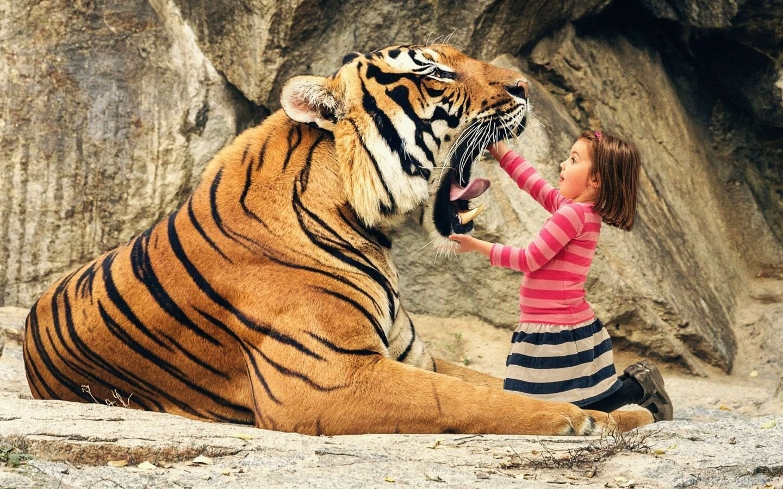 Cool Tiger Backgrounds Desktop Background