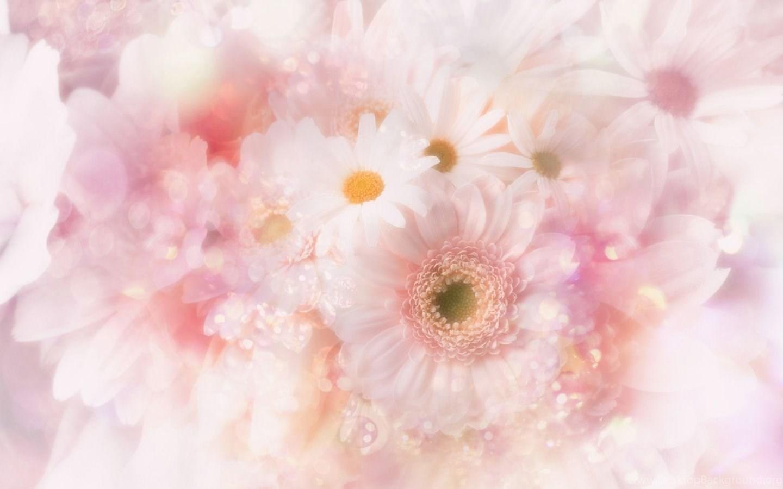 Cute Pink Flowers Wallpapers Desktop Background