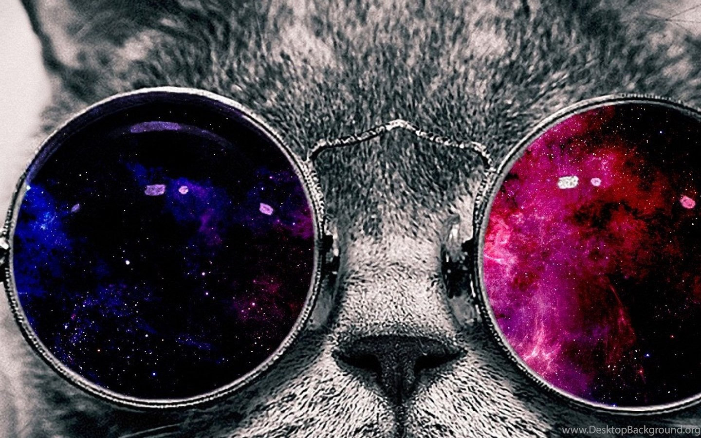 space galaxy cat with glasses  page 5  pics about space