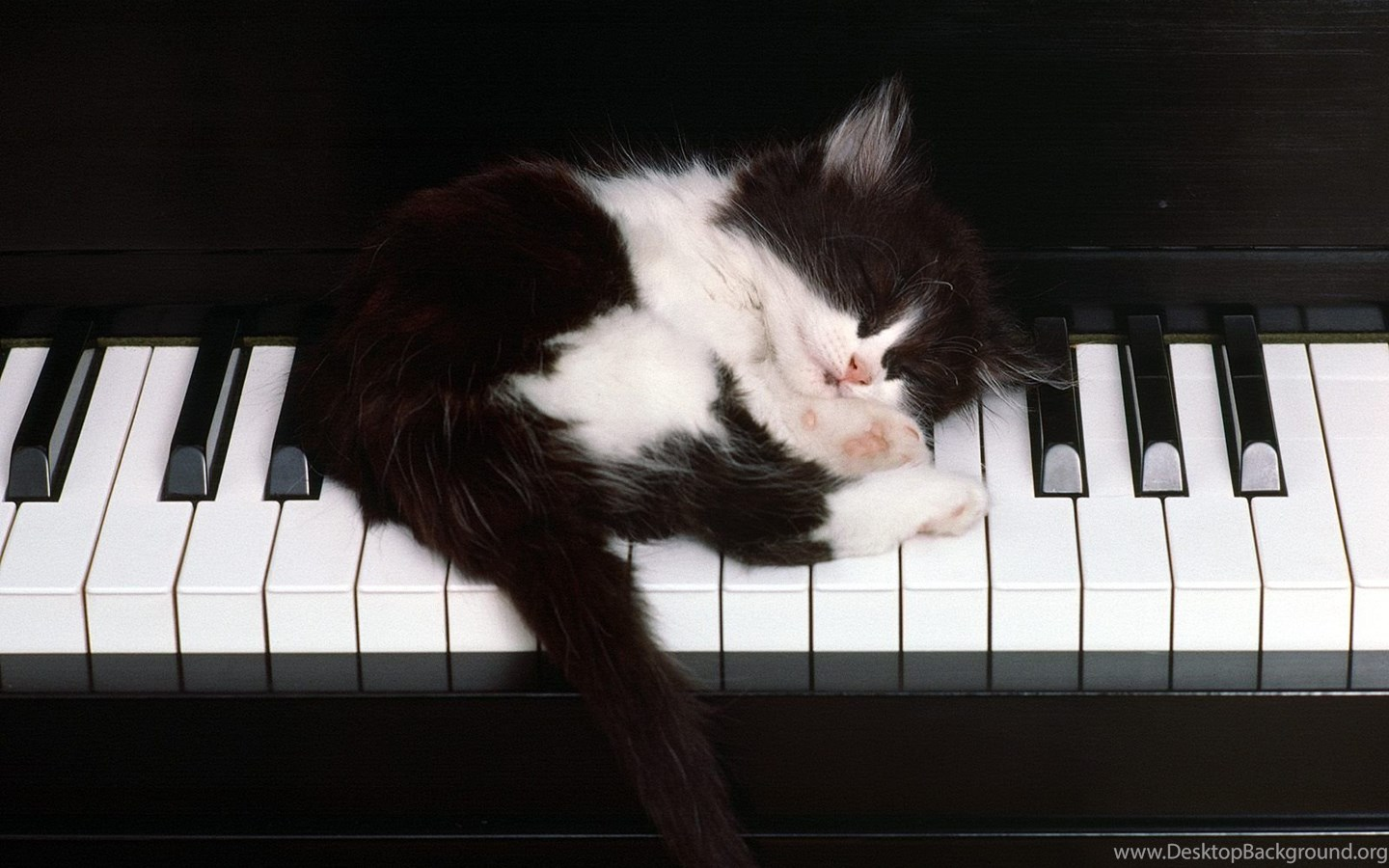 Wallpapers Piano Mac Cats Love Music Animals Play At Hd Backgrounds Desktop Background