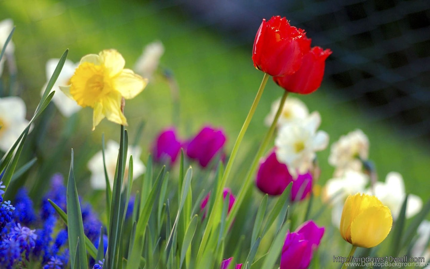 spring flowers hd free download wallpapers windows 10 wallpapers