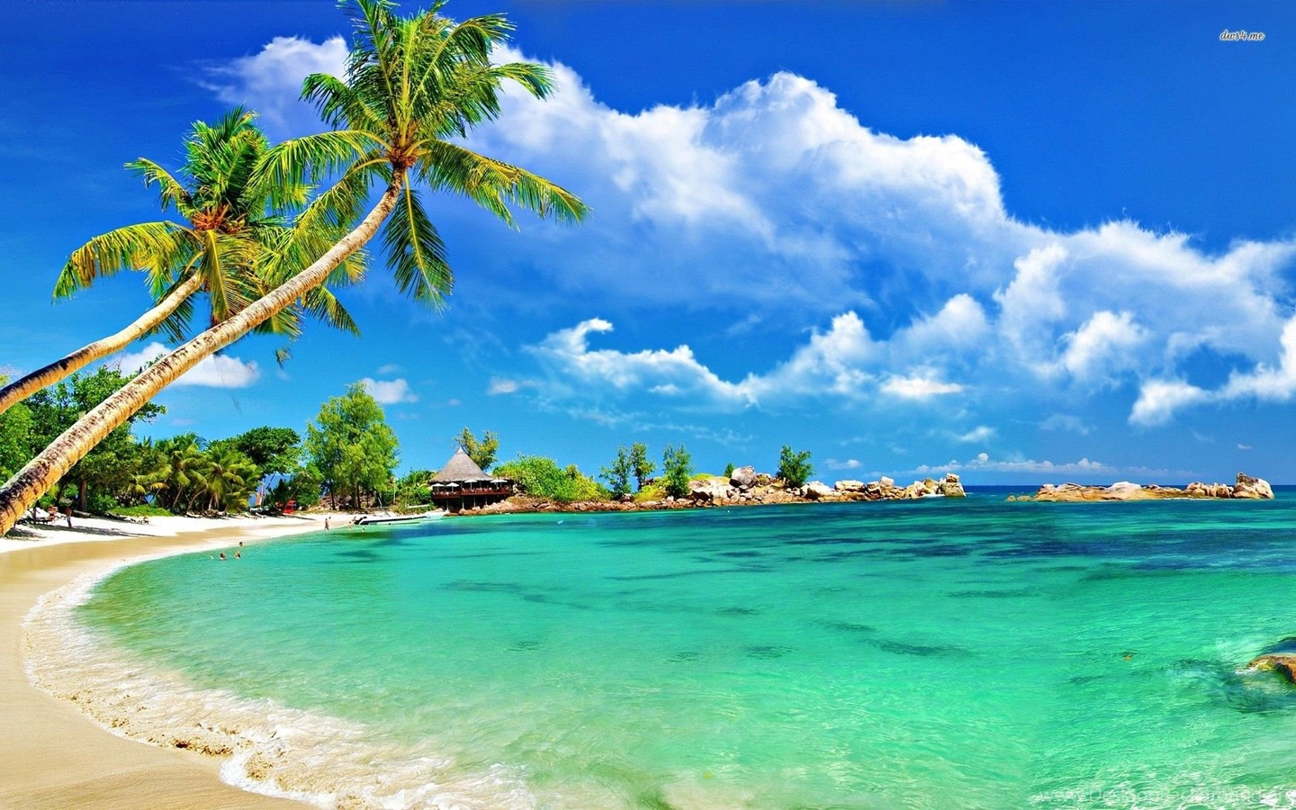 Hd Tropical Island Beach Paradise Wallpapers And Backgrounds: Tropical Beach Hammock Wallpaper. Desktop Background