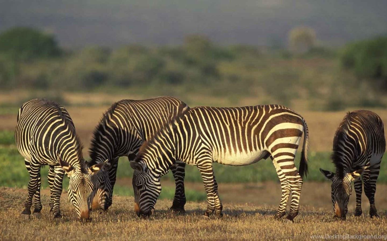 Картинки животных которые живут в африке