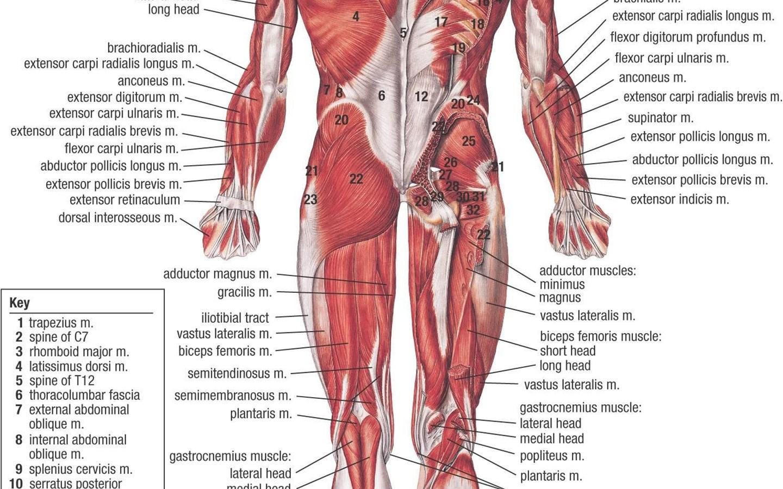 Anatomy Human Body Art Wallpapers Desktop Background
